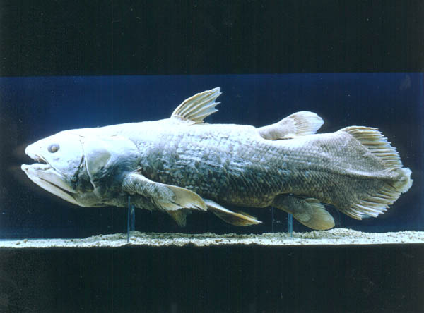 Central American Whintosser as well B0731P9VZF likewise Coelacanth Fish 0014231 besides Natural History Museum Nhm London as well Bugbear. on coelacanth